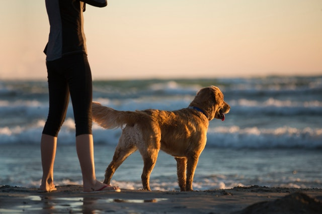9 Ways to Be a Better Dog Owner