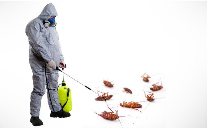 Get Rid of Pests from your Workplace – Some Tips